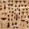 Planche d'insectes - 33 x 45 cm.