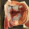 Traité d'anatomie féminine - page 3